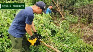Як волонтери прибирали територію Королівського замку (фото, відео)